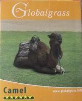 TRAWA SPORTOWA CAMEL Na Suszę 5 KG+1kg gratis=6 kg
