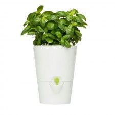Doniczka Na Zioła Fresh Herbs Z Systemem Nawadniania