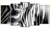 Zebra Rozmiar - 5x100x50