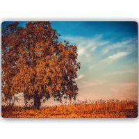 Obraz na metalu, Drzewo jesienią 60x40