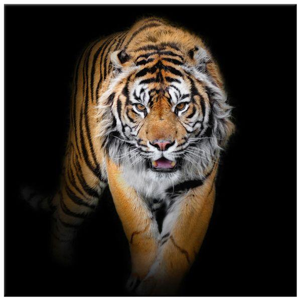 Obraz Na Ścianę 30X30 Tygrys Tygrys Zwierzę zdjęcie 4