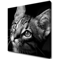 Obraz Na Ścianę 50X50 Spojrzenie Kotek Młody Kot