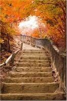 80cm 120 obraz Jesienny spacer ścienny druk cyfrowy