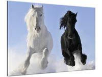 Obraz Black and white 100x70 PRODUCENT