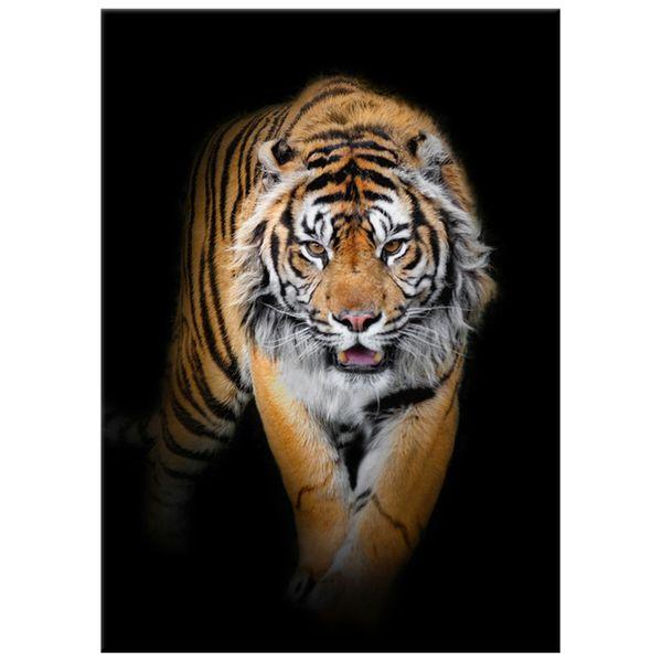 Obraz Na Ścianę 50X70 Tygrys Tygrys Zwierzę zdjęcie 4