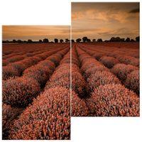 OBRAZ DRUKOWANY  Oszałamiający krajobraz z lawendą w pomarańczu 60x60
