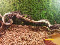 Gałąź, patyk biały do terrarium 60cm Banana Stick 1szt.