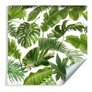 Tapeta Liście Tropikalne Palmy Bananowca Monstery