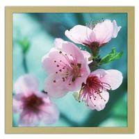 Obraz w ramie naturalnej, Migdałowe różowe kwiaty 20x20