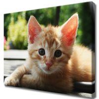Obraz Na Ścianę 50X40 Rudy Kot Kotek Mały Kot Rud