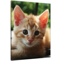 Obraz Na Ścianę 30X40 Rudy Kot Kotek Mały Kot Rud