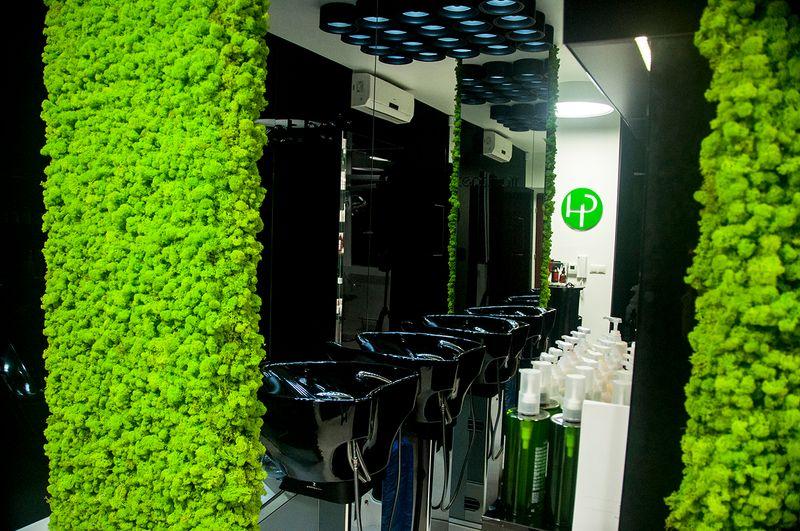 Panel Scienny Mech Premium 50x50 Cm Panele Z Mchu Zielone Sciany