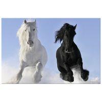 OBRAZ DRUKOWANY  Black and white 90x60