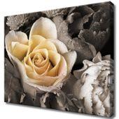 Obraz Na Ścianę 50X40 Delikatna Róża Płatki Róży