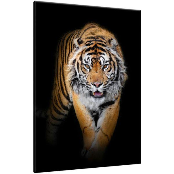 Obraz Na Ścianę 50X70 Tygrys Tygrys Zwierzę zdjęcie 1