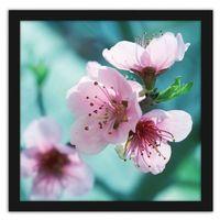 Obraz w ramie czarnej, Migdałowe różowe kwiaty 50x50