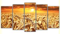 Zboże - zachód słońca Rozmiar - 5x200x120