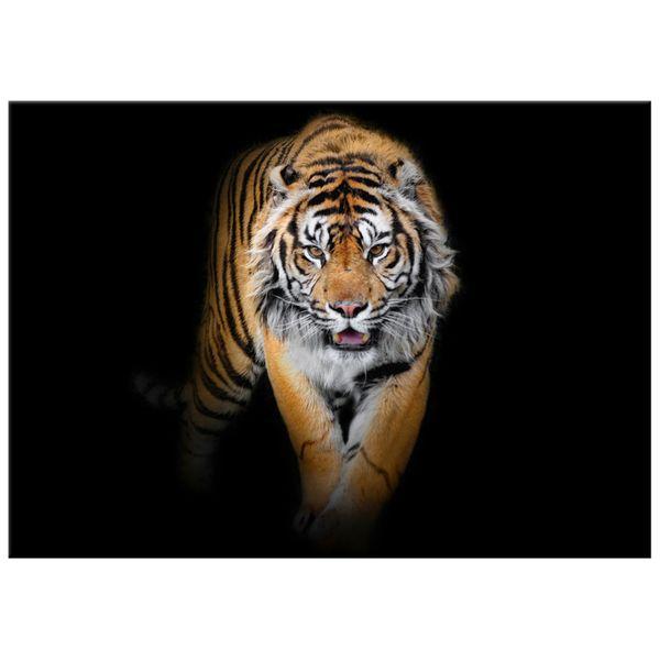 Obraz Na Ścianę 70X50 Tygrys Tygrys Zwierzę zdjęcie 4