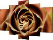 Obraz drukowany Róza herbaciana 150x100