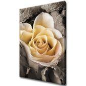 Obraz Na Ścianę 50X70 Delikatna Róża Płatki Róży