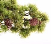 Drzewko bonsai iglaste z szyszkami zdjęcie 2