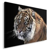 Obraz na płótnie - Canvas, Tygrys 3 70x50 zdjęcie 2