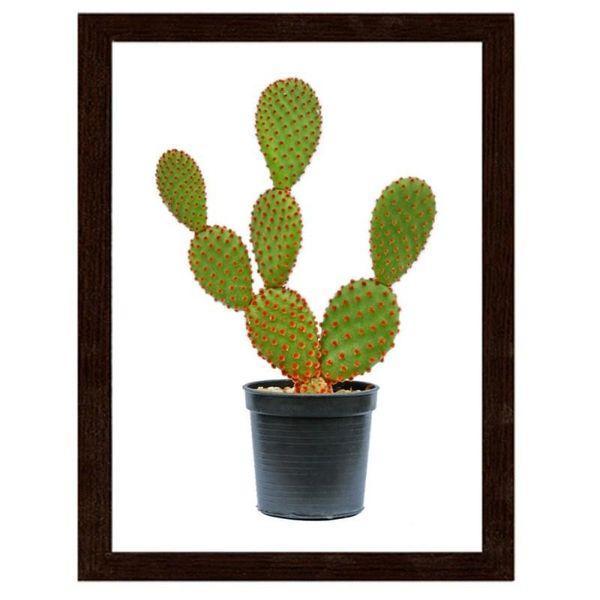 Obraz W Ramie Brazowej Kaktus W Doniczce 40x50