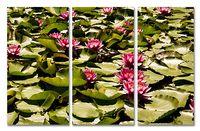 Lilie wodne na listkach Rozmiar - 3x100x50, Kolor - Kolor