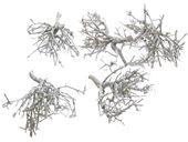 Krzew drzewa, suszone patyki białe, 10-20cm, 5 sztuk Suszu