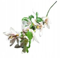 Kwiaty sztuczne Wanilia ekri