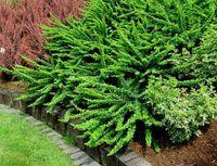 BERBERYS GREEN CARPET  PŁOŻĄCY OKRYWOWY  PROMOCJA