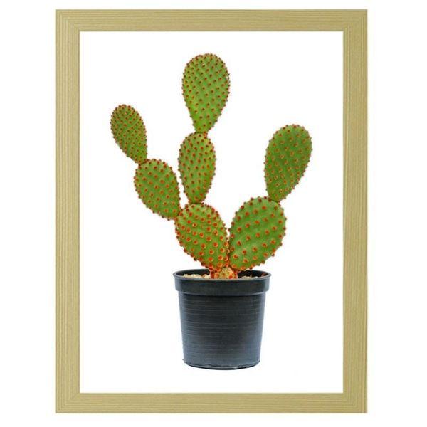 Obraz W Ramie Naturalnej Kaktus W Doniczce 60x80