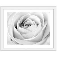 Obraz w ramie białej, Biała róża 70x50
