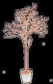 Drzewko w doniczce 157 cm #