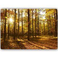 Obraz na metalu, Jesienne promienie słońca w lesie 60x40