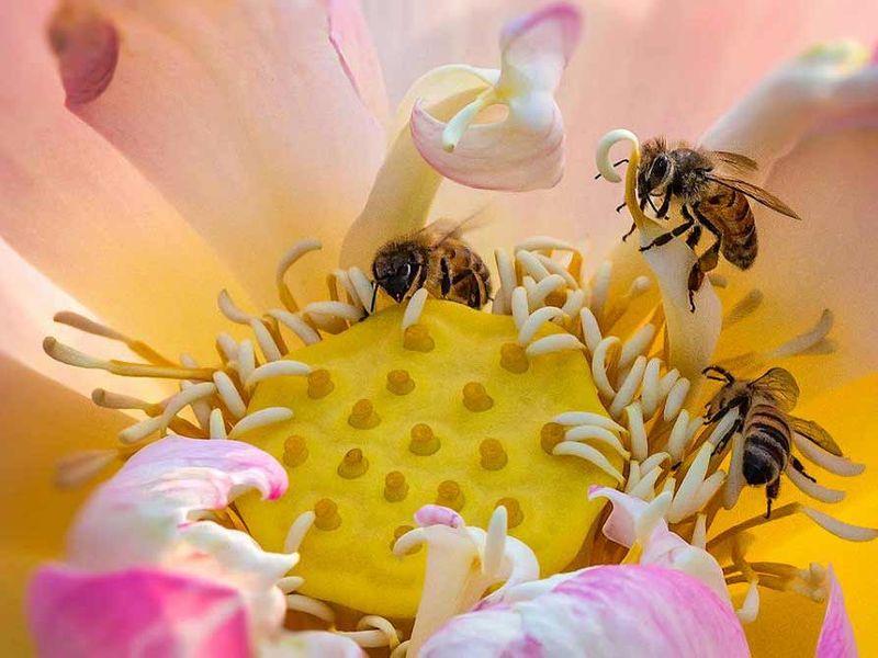 Nasiona Mieszanka roślin miododajnych Bee's Universe 1kg zdjęcie 4