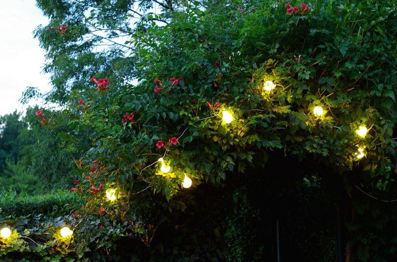 Sznur Lampek 10 M 20 Kulek Led śr 6 Cm Zewnętrzne Oświetlenie Ogrodowe Nr 0239 Wybierz Kolor światła Zimny Biały