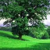Obraz na płótnie - Canvas, okno - drzewo 120x80 zdjęcie 3