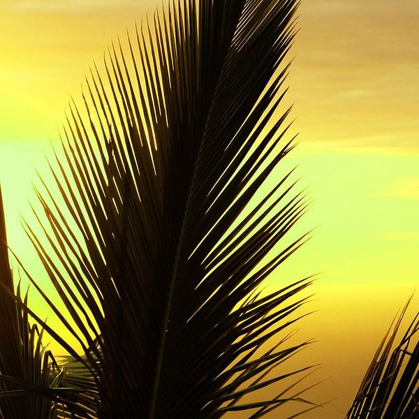 Obraz na płótnie - Canvas, okno - palmy 120x80 zdjęcie 3