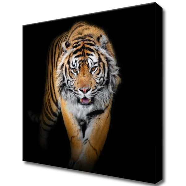 Obraz Na Ścianę 30X30 Tygrys Tygrys Zwierzę zdjęcie 1