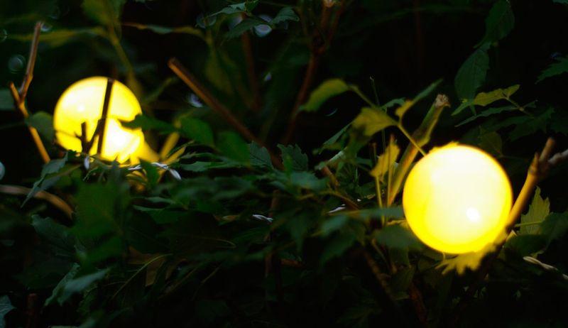 Sznur Lampek 10 M 20 Kulek Led śr 6 Cm Zewnętrzne Oświetlenie Ogrodowe Nr 0239 Wybierz Kolor światła Multikolor