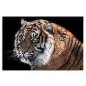 Obraz na płótnie - Canvas, Tygrys 3 70x50 zdjęcie 1