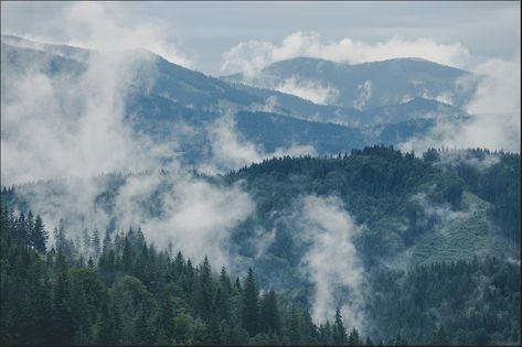 Fototapeta Las we mgle, Leśny Krajobraz, Góry 450x300