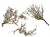 Krzew drzewa, suszone patyki naturalne 10-20cm, 5 sztuk