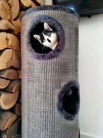 Sizalowy drapak dla kota TUBA 100cm pompony do zabawy M17024