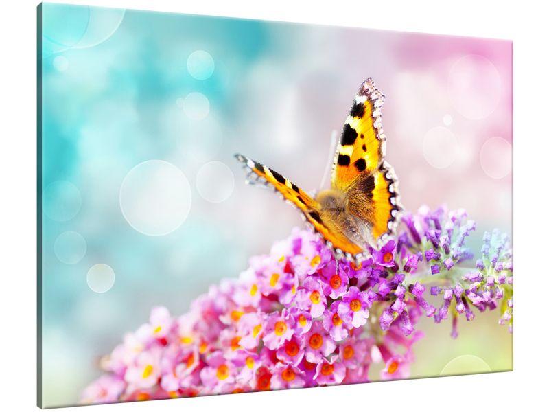 Obraz Motyl na kwiatkach 100x70 GRATISY na Arena.pl